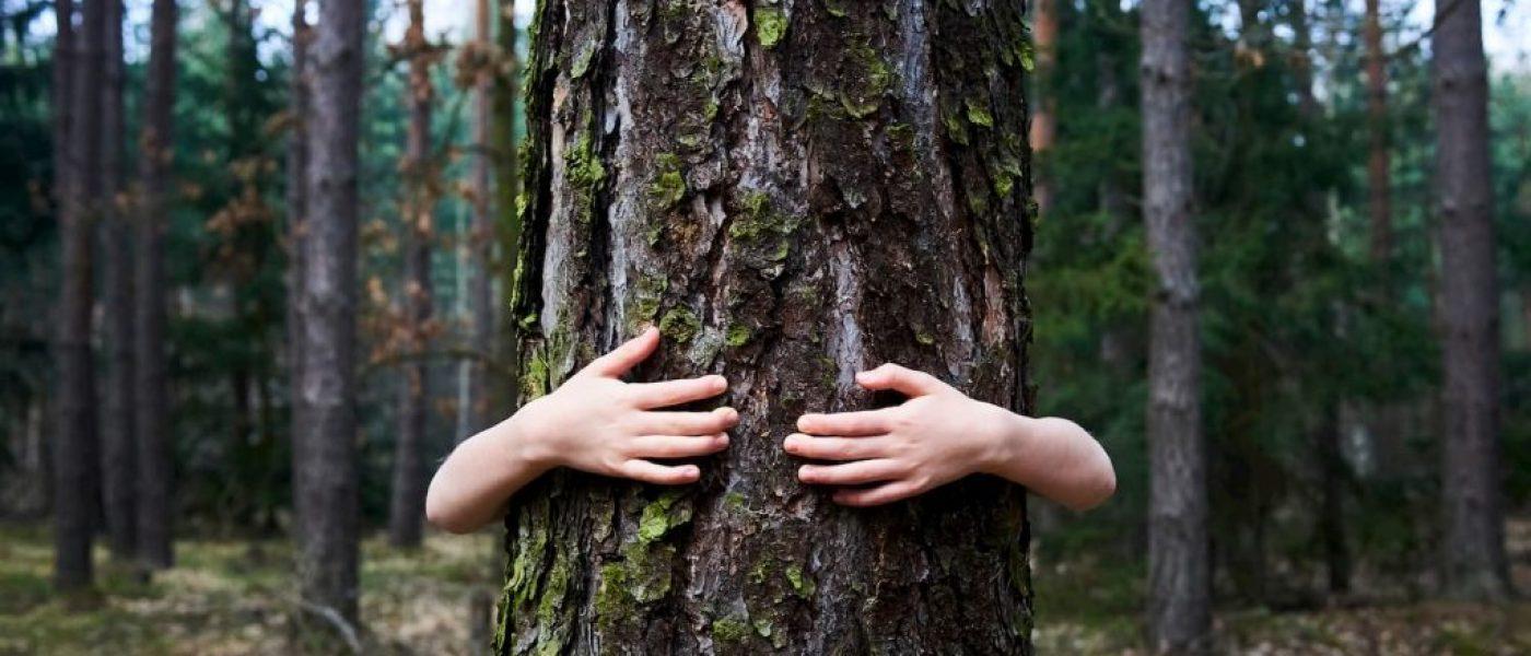 La mythologie de l'arbre de vie
